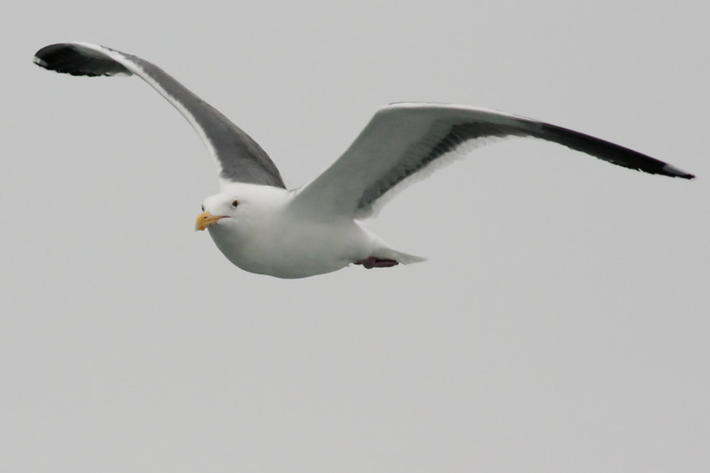 A fresh 300mm lens and the moving boat let me get some nice closeups of the birds gliding along with us.