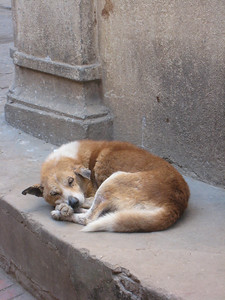 Sleeping dog at Bhaktapur