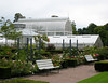 Roses and glasshouse