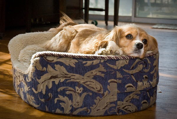 Dash all sad in his bed. Tired?