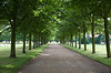 An allee at Hampton Court