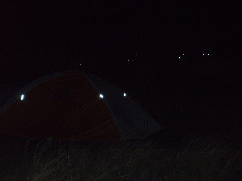 Fårbesök vid tältet