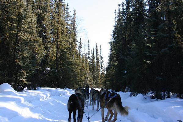 Fairbanks & Dog Mushing Tour