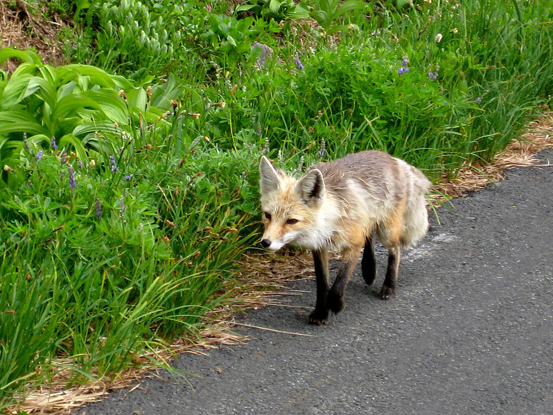 I can't lie - this was taken from the car. The little guy seemed to be doing fine, just annoyed with us.