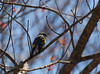 Yellow Rumped Warbler<br /> <br /> Thanks Pat and Steve. :)
