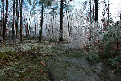 The poor trees, today they were standing up straighter after the ice melted off them.