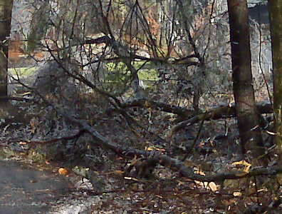 Large branches broken everywhere.