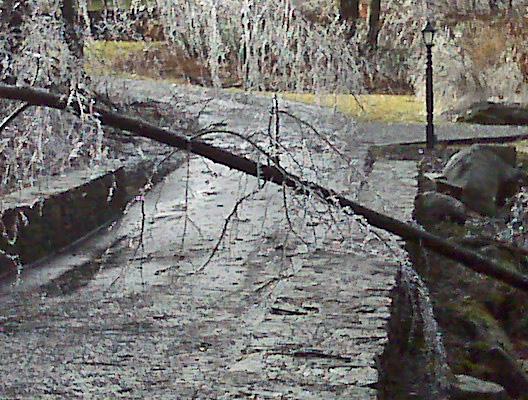 A smallish tree across a neighbor's driveway.