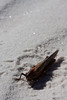 A large grasshopper sits where he died under the bright New Mexico sun.