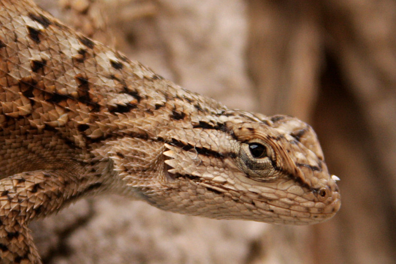 Up close and personal with on of the local lizards.