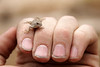 A tiny lizard perches on my fingers.