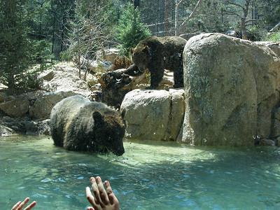 Zoo - May 2008
