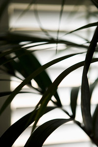Palm leaves on front of window