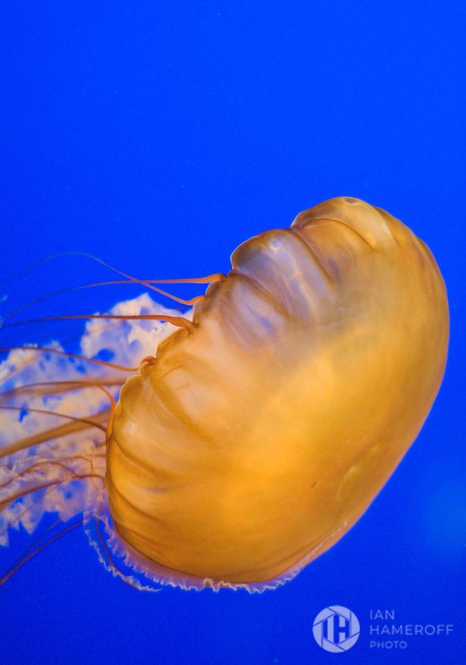 A Ghost in Aquarium