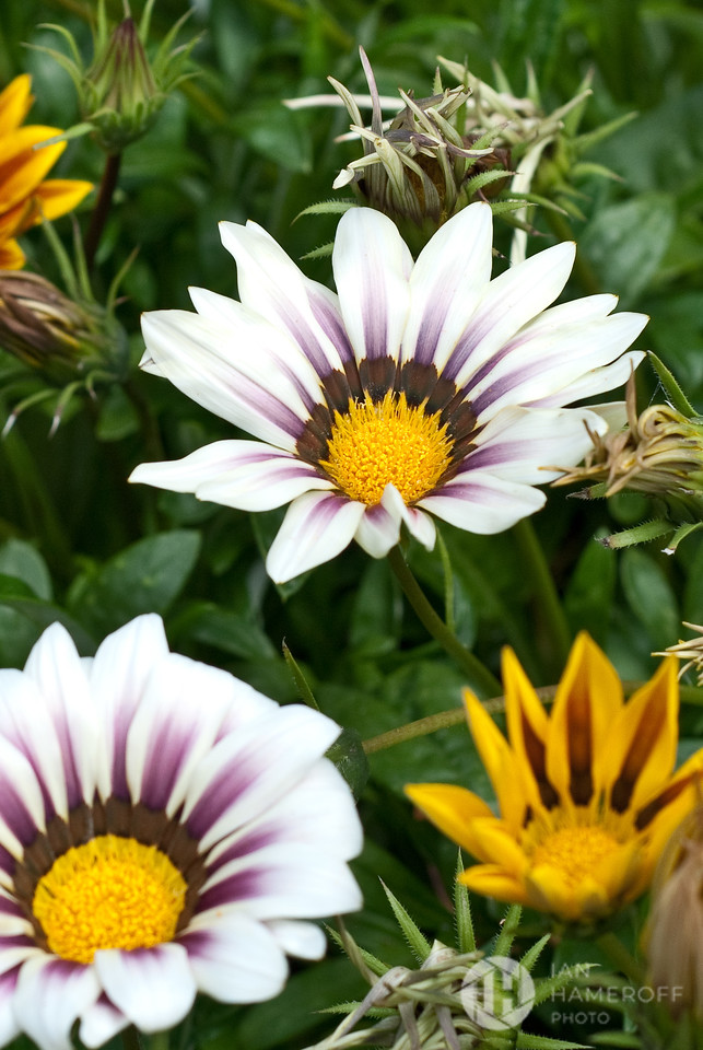 White, Brown and Yellow