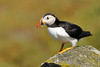 """03-07-2010 <a href=""""http://www.rspb.org.uk/wildlife/birdguide/name/p/puffin/index.aspx"""" >Puffin</a> <a href=""""http://en.wikipedia.org/wiki/Isle_of_May"""" >Isle of May</a> <DIV ALIGN=RIGHT><i><a class=""""nav"""">© Felipe</a></i></DIV>"""