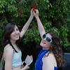 Busch Gardens 010