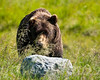 Grizzly Bear - Anchorage, Alaska