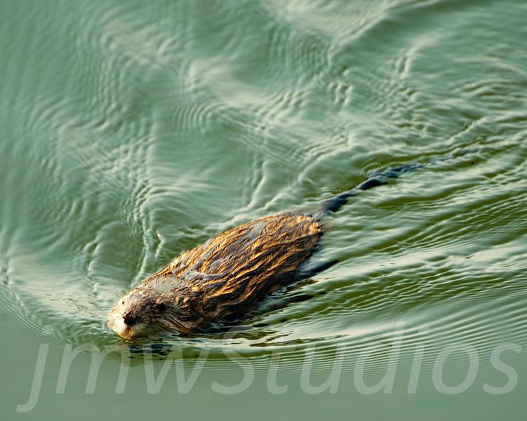 Busy Beaver