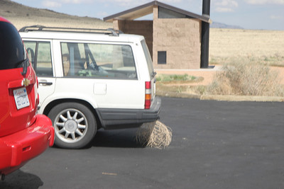 It was a very windy day, and when we returned to our car we weren't surprised to find that she had trapped a tumbleweed with her bumper!