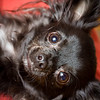 Loki + Oden 2-18-09