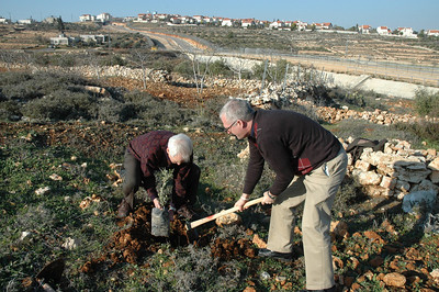 Bishop Peter Rogness, left, ELCA Saint Paul Area Synod, and Bishop Jon Anderson, ELCA Southwestern Minnesota Synod, plant an olive tree at Beddo, West Bank, Jan. 12.