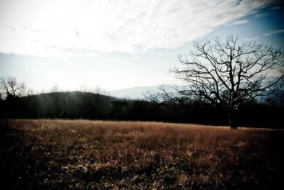 Lone Tree; Skyline Drive 2010