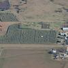 A corn maze, Northern Oklahoma
