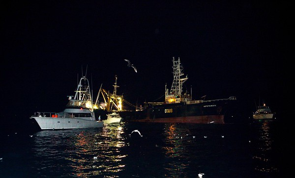 090821 2209 Tuna trip _MG_6763 a
