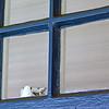 WindowDetailCloseUp