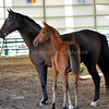 Landfriese II x Wencke Creek Filly 2365