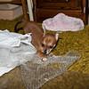 Dolly 02-01-09