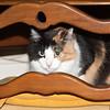 Dolly 03-14-09