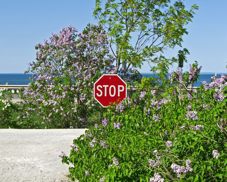 Stop...and smell the lilacs!