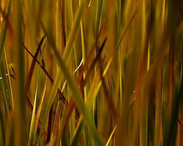 Dusk in the Wetlands