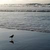 Asilomar State Park Beach