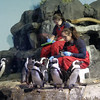 Penguin Feeding, Monterey Aquarium