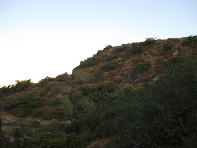 Looking up to the north to where the old flagpole is.  There is potential for an easy trail around this mountain.