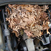 nest that squirrels made in our van!  little bastards