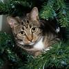 Kali Dapple in the Christmas Tree