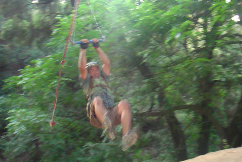 Monkeys on swings