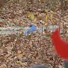 blue bird on tinky's line