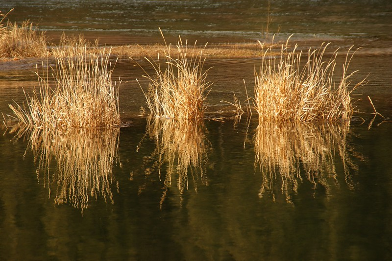 Autumn Grass when the River is High