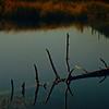 Floating Log in Miller Lake