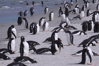 This party controls most of the votes in the Falklands.