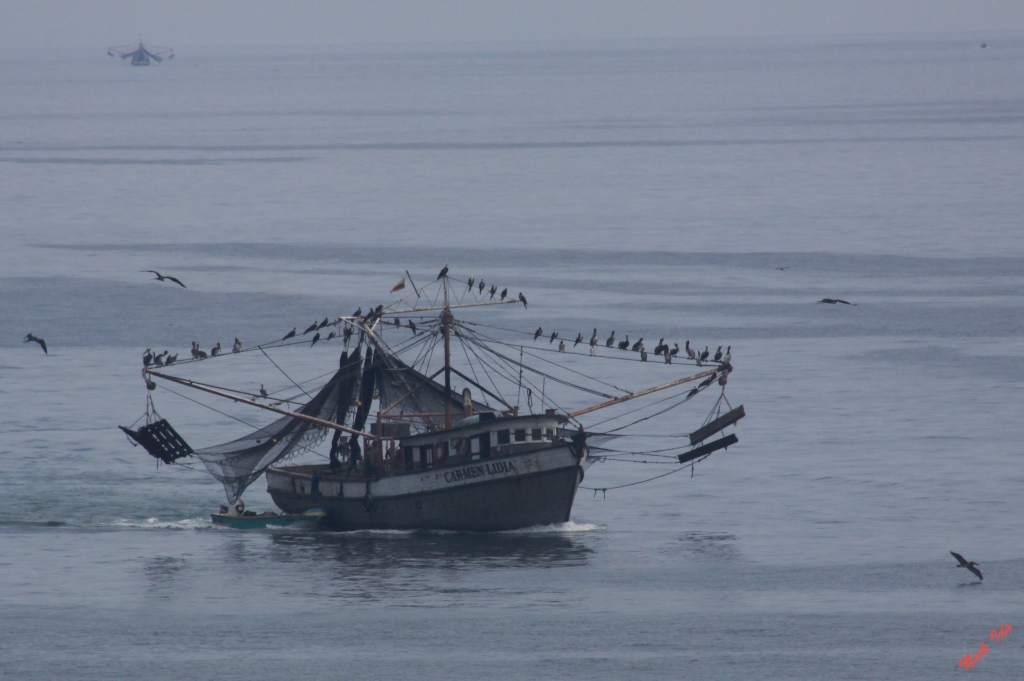 The fleet and the flock coming in with the tuna catch in Manta, Ecuador.
