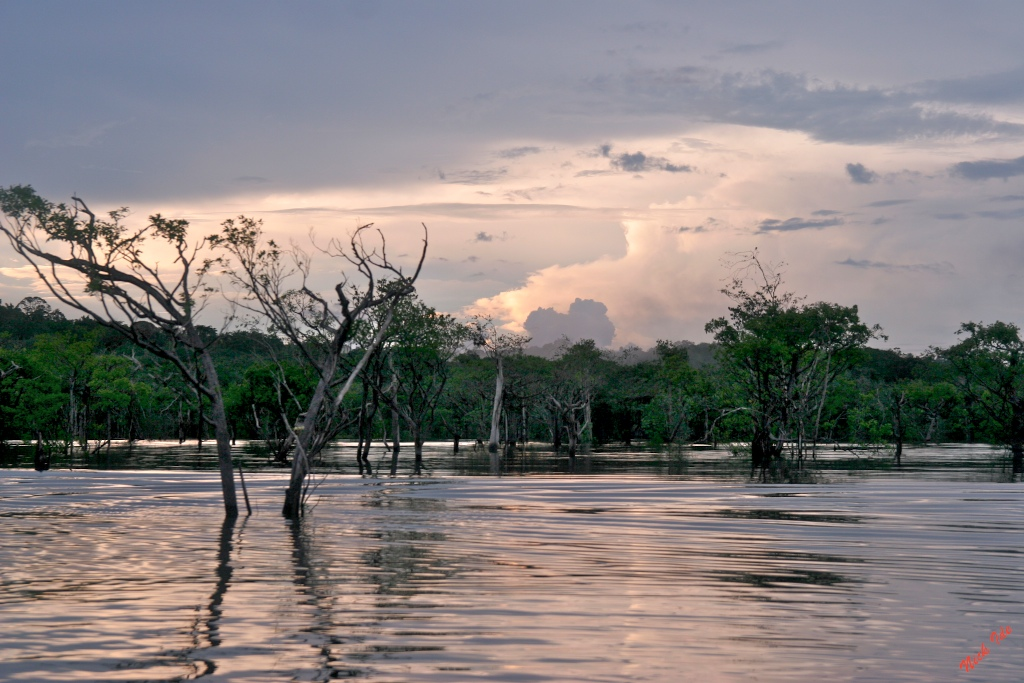 Amazon River near Manaus, Brazil Great place for Piranha fishing!