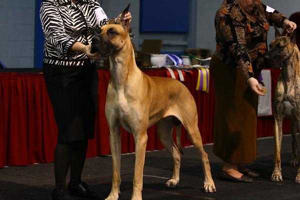 12-18 Puppy Dog