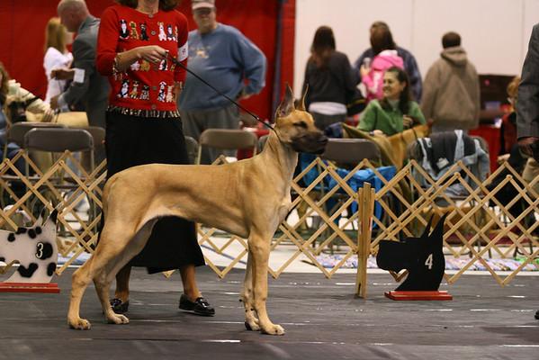 6-9 Puppy Dog