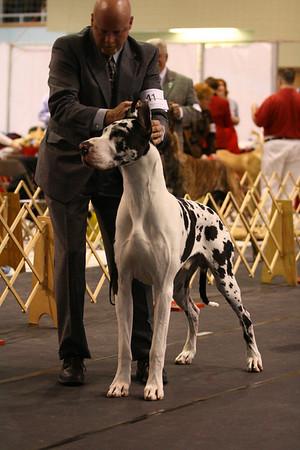 12-15 Junior Dog